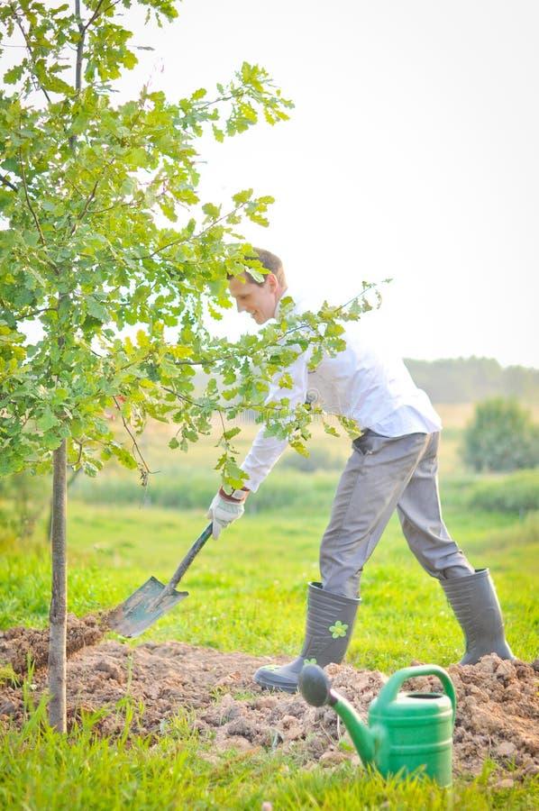 Man som planterar en tree. arkivfoton