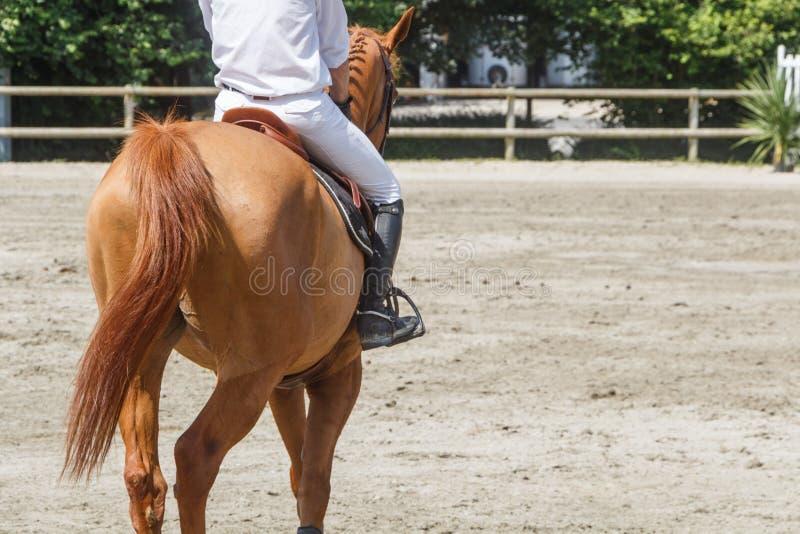 Man som rider en kastanjebrun häst royaltyfri foto