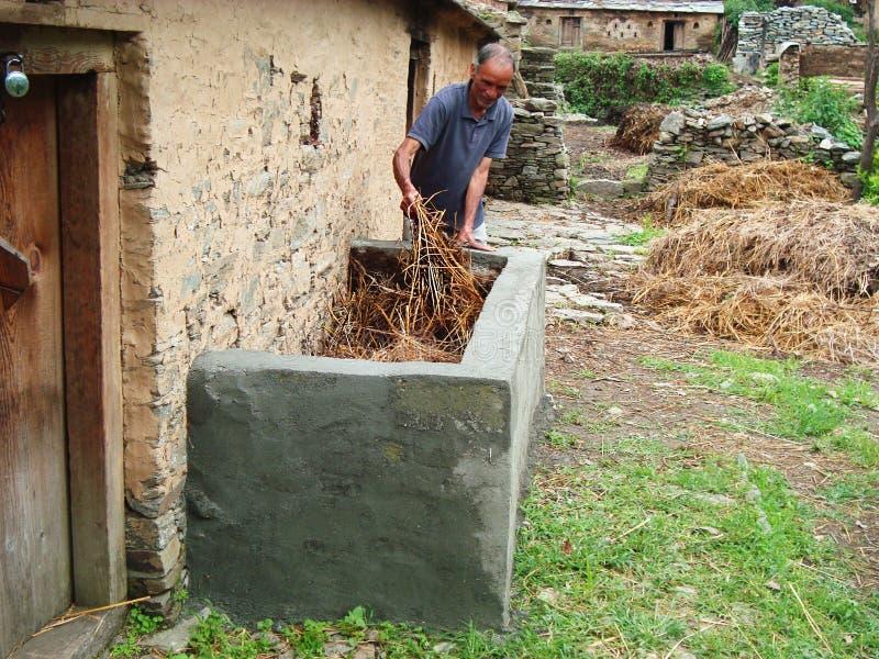 Man som sätter foder i by av Indien royaltyfri fotografi