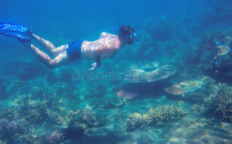 Man som snorklar i korallrev av det tropiska havet Ung man, i att snorkla maskeringen och fena Undervattens- foto royaltyfri bild