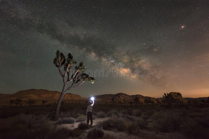 Man som undersöker Joshua Tree National Park på natten arkivbilder
