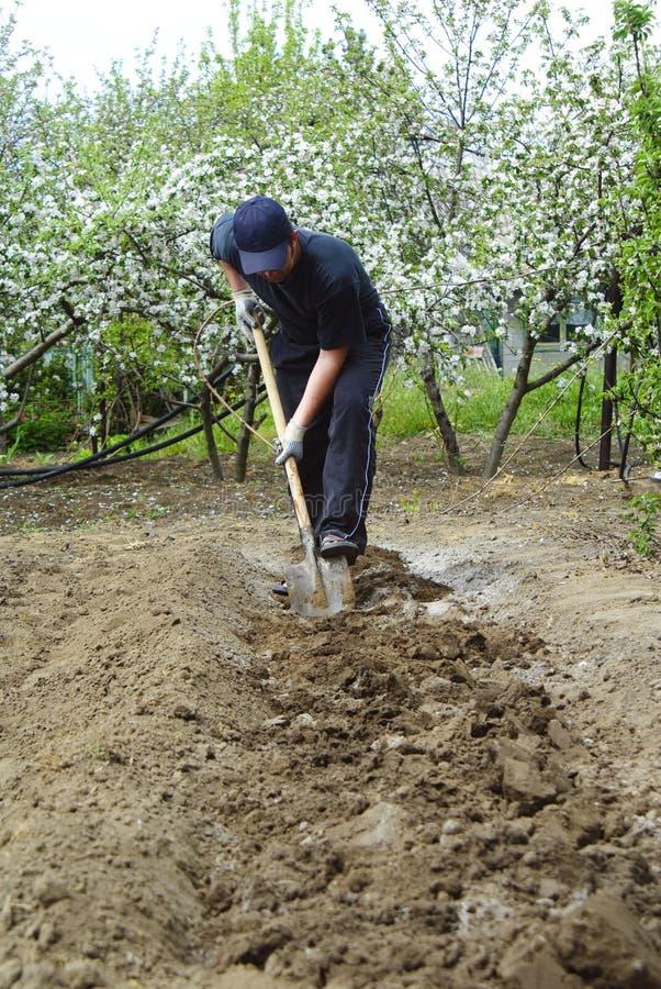 Download Man with spade stock photo. Image of gardener, volunteering - 14404130