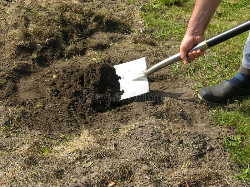 Man with spade doing work in the garden stock photography
