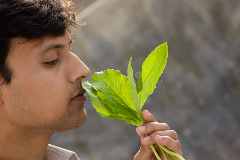 Man and spinach stock photography