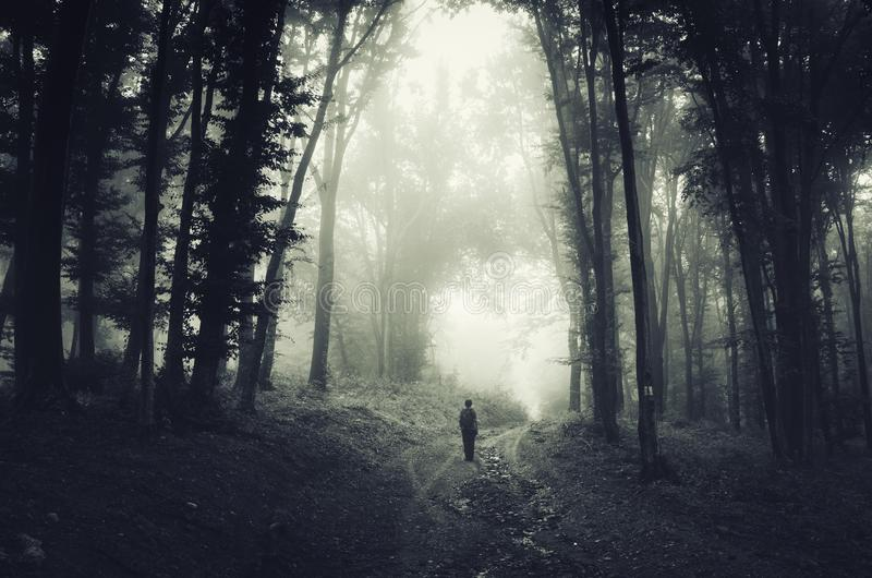 Man in spooky dark forest with fog on Halloween royalty free stock photography