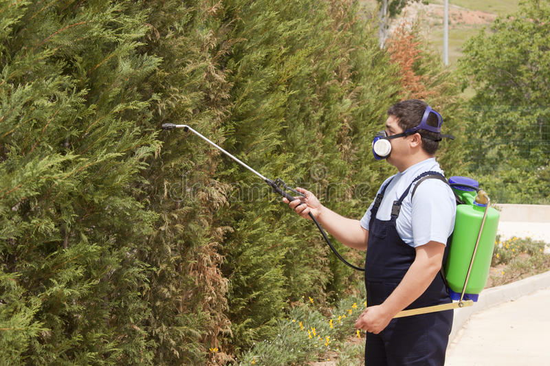 Man spraying insects- pest control. A gardener is Spraying trees in garden stock images