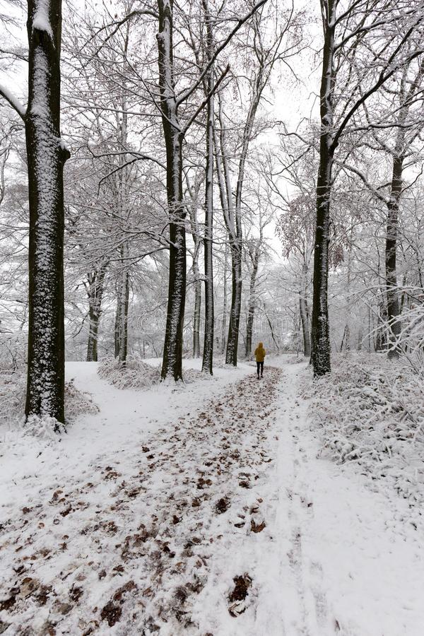 Man spring i skogen på vintertid som är dold med snö royaltyfri fotografi