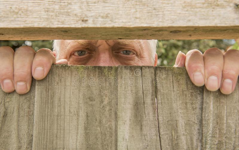 Man spying through a wooden fence in the garden. Mature man spying through a wooden fence in the garden stock image