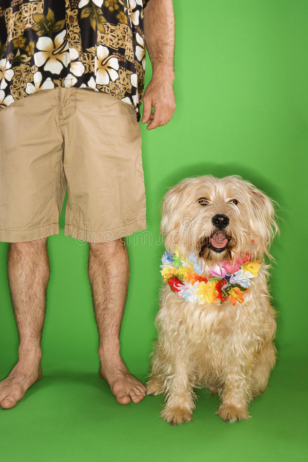Man standing with dog wearing lei. royalty free stock image