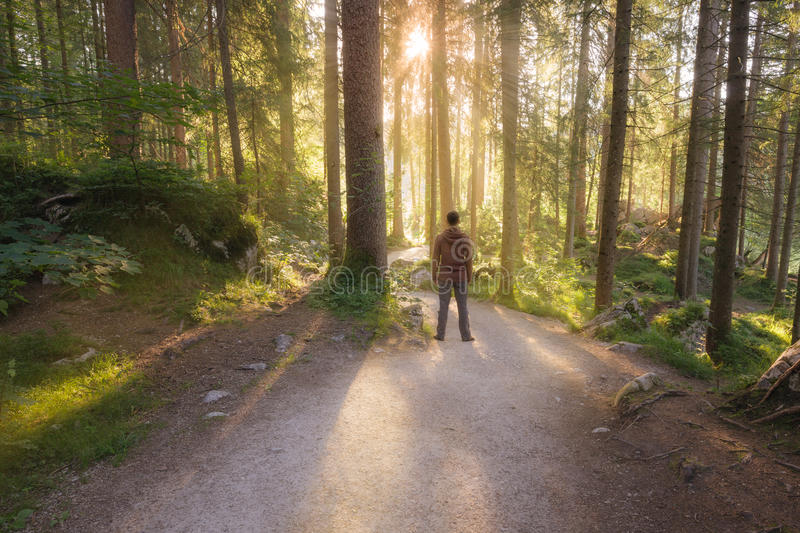 Man standing at the forest path. Man standing at the sunny forest path royalty free stock photo