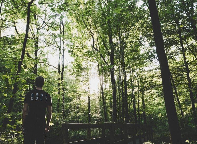 Man Standing on Forest Trees Near Small Bridge stock photos