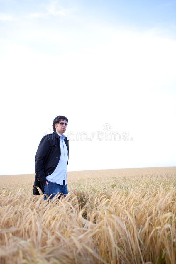 Man is standing in a grain field. Man is standing alone in a grain field wearing sunglasses royalty free stock image