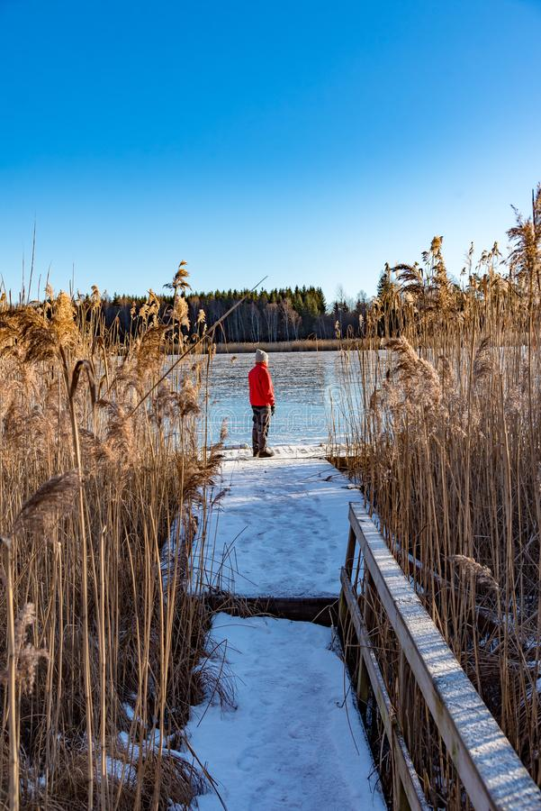 Man standing at a jetty between reed stock photo