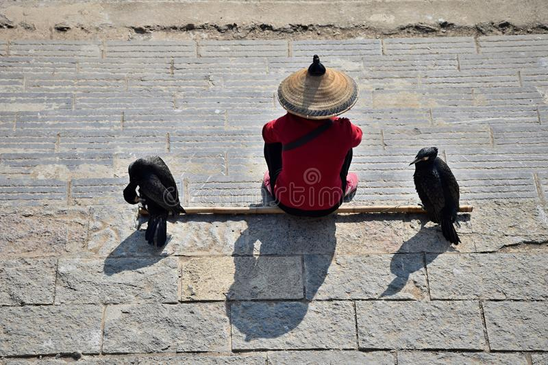 The man with the straw hat and two cormorants sit on the bank of the river. stock image