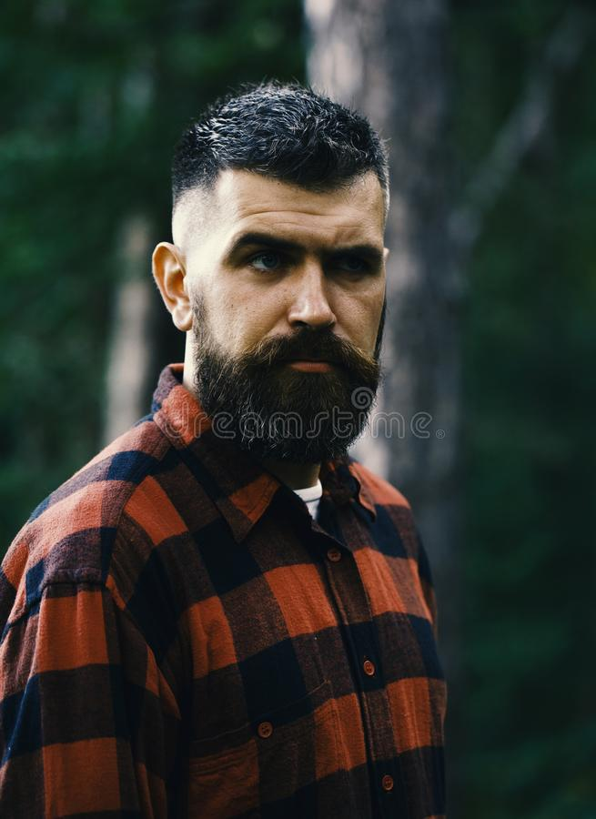 Man with strict face and beard in plaid, checkered shirt,. Man with strict face and beard in plaid or checkered shirt, lumberjack style. Man with stylish beard stock images