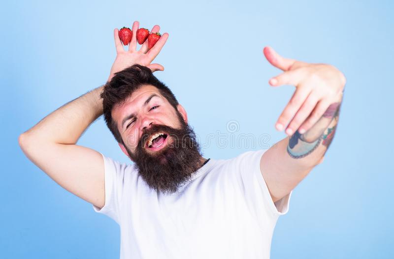 Man successful gardener king of strawberry blue background. Man bearded hipster holds hand with strawberries above head. As crown. Hipster happy bearded face stock images
