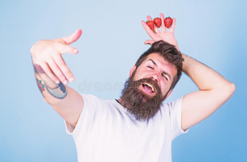 Man successful gardener king of strawberry blue background. Man bearded hipster holds hand with strawberries above head. As crown. Hipster happy bearded face royalty free stock photography