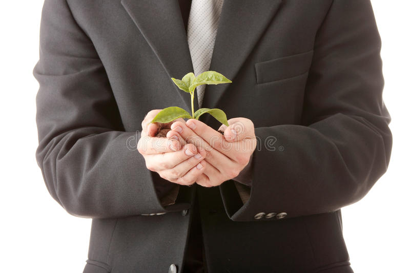 Man in suit holding smal plant in his hands royalty free stock photo