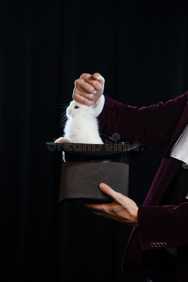 Man in suit pulling a rabbit out of the topper hat. close-up. stock images