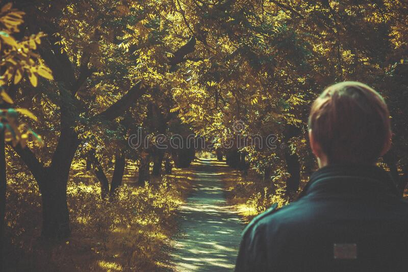 Man on sunny forest trail royalty free stock images