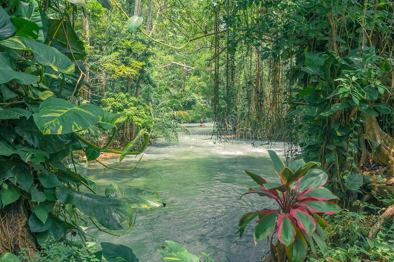 Man taking a gentle river raft through the rain forest royalty free stock photos