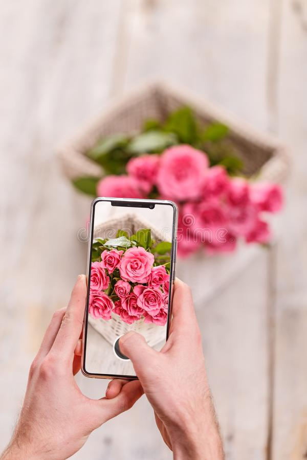Man taking photo. Of Rose flower with mobile phone royalty free stock photo