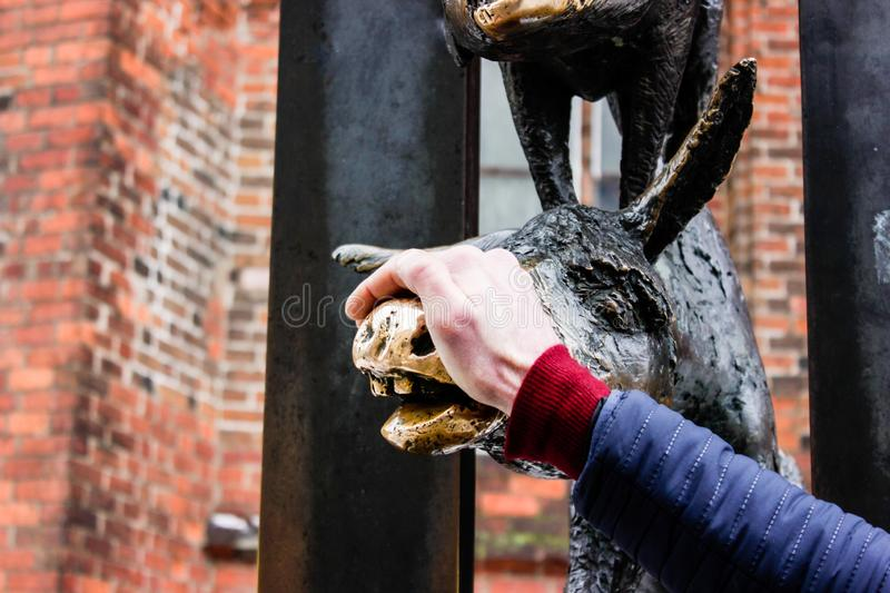 A man touches a face of Donkey from Bremen Town Musicians in old town of Riga, Latvia in february 2019. The Bremen Town Musicians, the sculpture standing in old royalty free stock images