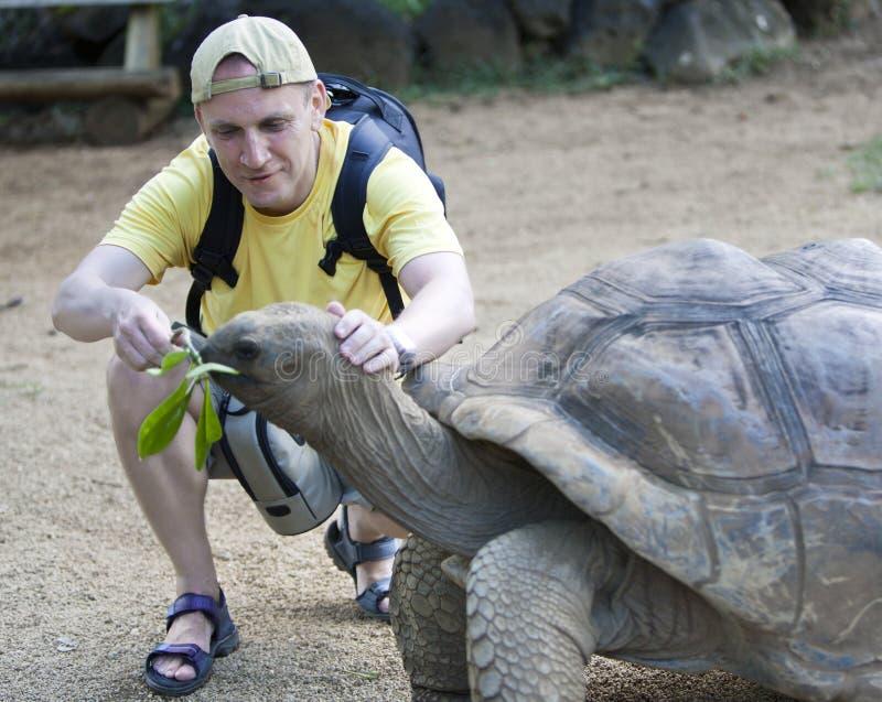 The man the tourist feeds a turtle royalty free stock photos