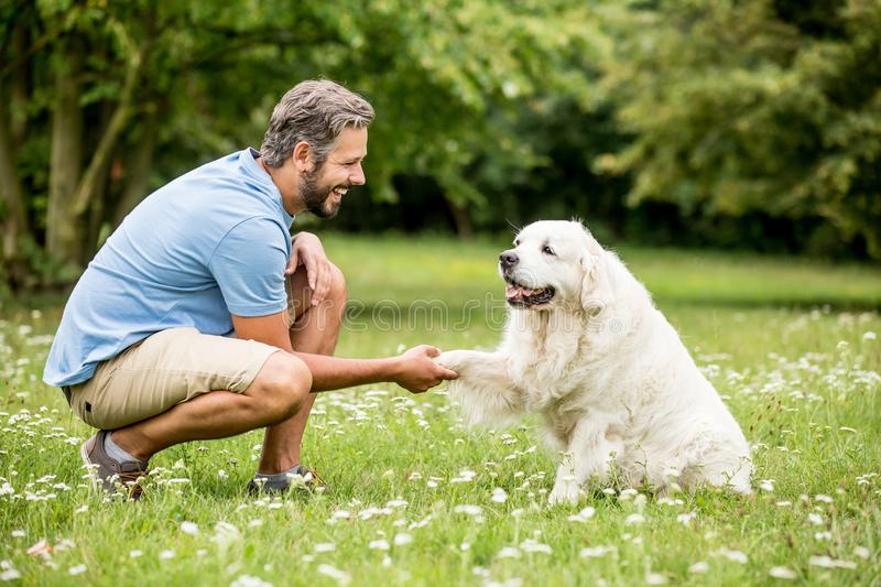 Man training dog in the park stock photography