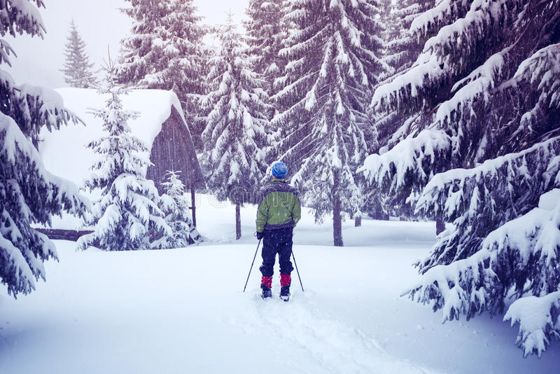 Man with trekking poles is coming to the shelter. In the winter mountains during snowfall. Back view stock photography
