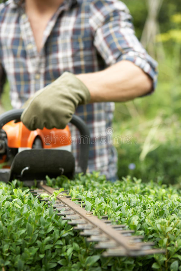 Download Man trimming hedge stock photo. Image of vertical, trimmer - 21592340