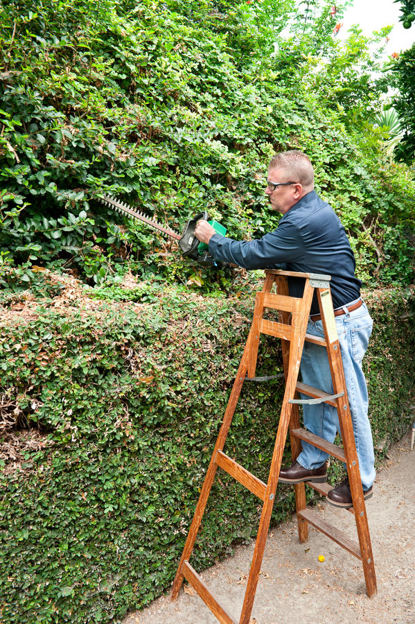 Download Man trimming vines stock image. Image of ladder, chores - 21025685