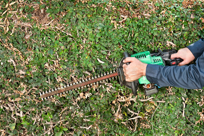 Download Man trimming vines stock photo. Image of chores, trimmer - 21025790