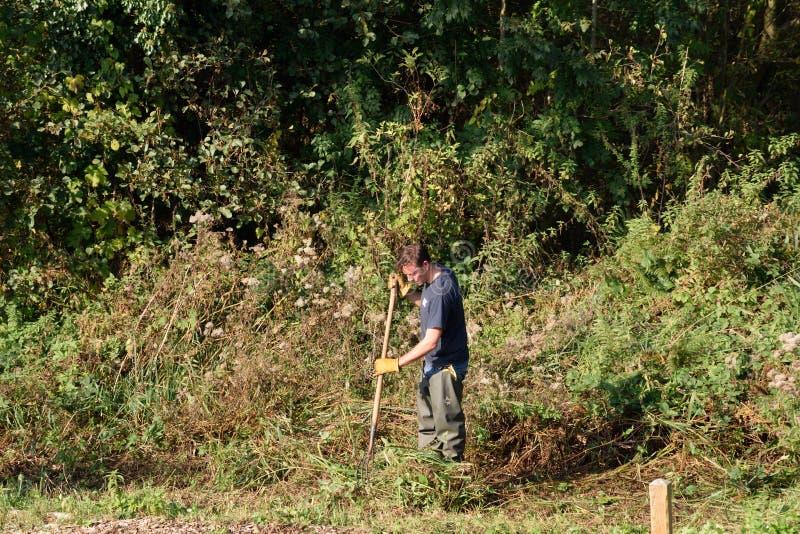 Man undertaking conservation work alongside River Yare. Wroxham Norfolk , United Kingdom - October 25, 2016: Man undertaking conservation work alongside River stock image