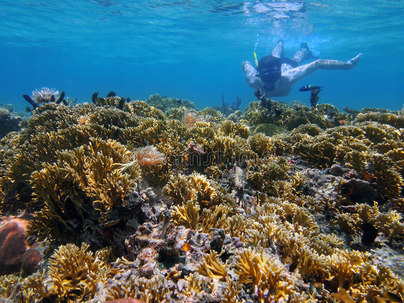 Man undervattens- snorkla i en grund korallrev arkivfoton