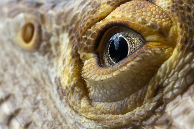 Man uppsökt drakeögonmakro royaltyfri foto