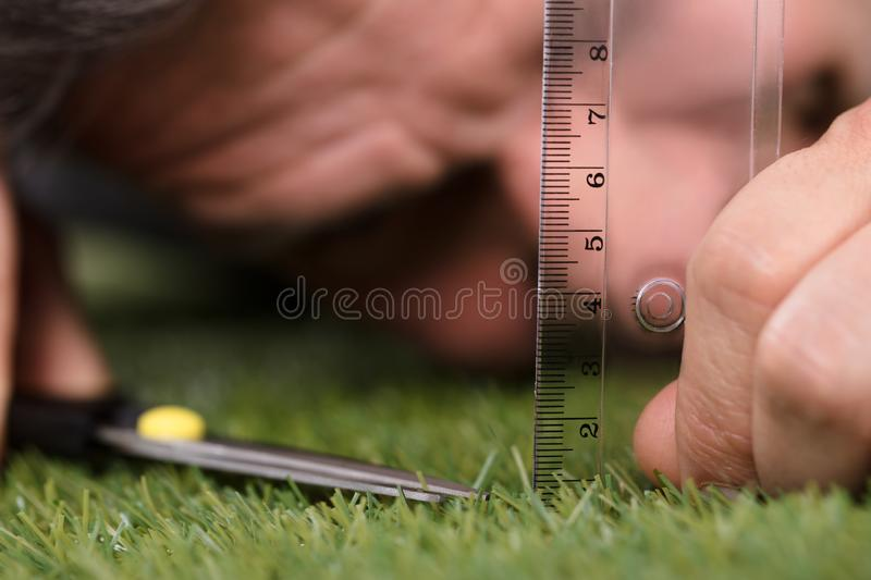 Man Using Measuring Scale While Cutting Grass. Close-up Of A Man Using Measuring Scale While Cutting Grass With Scissors royalty free stock photo