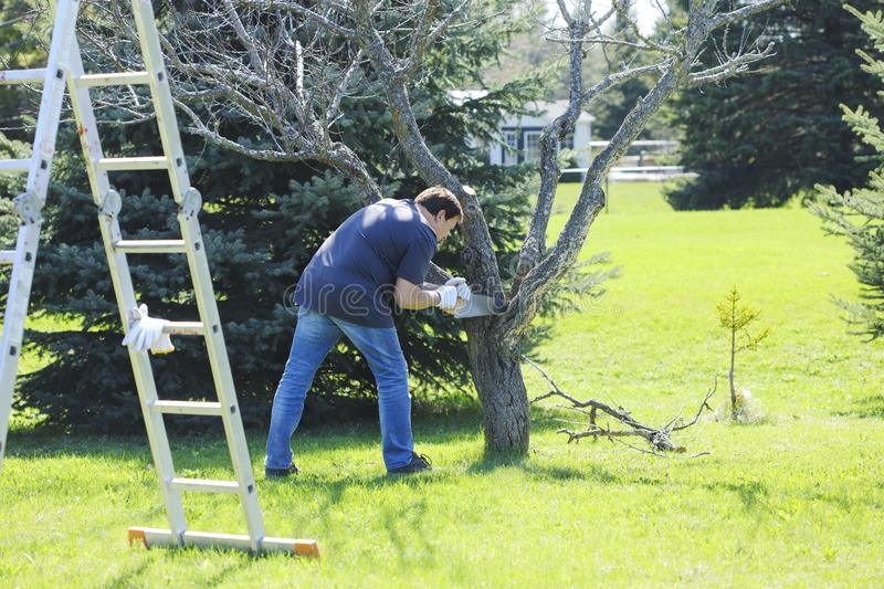 Man using a saw for cutting a branch tree. Gardener working in t royalty free stock photography