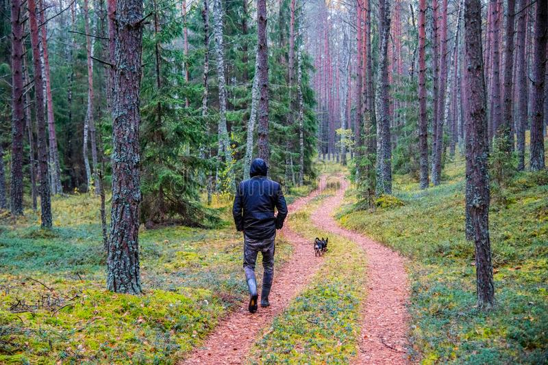Man walk down the path of pine trees. In the morning with his dog stock images