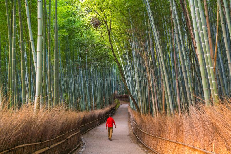 Man walking through bamboo forest at Sagano, Arashiyama, Kyoto stock image
