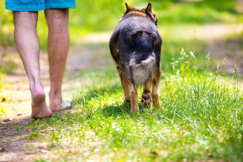 Man walking barefoot with a dog. On dirt road in summer stock images