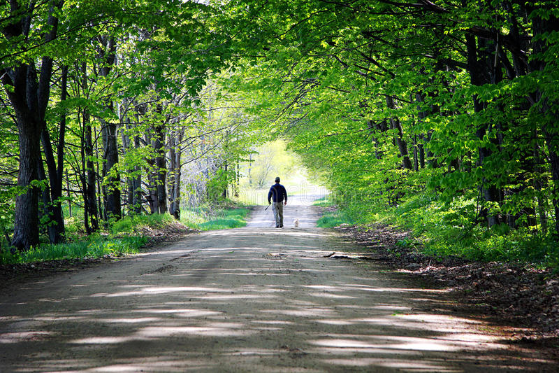 Man Walking Dog. A man and his dog walking down a shaded dirt road lined with a canopy of maple trees in spring