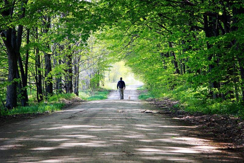 Man Walking Dog stock photography