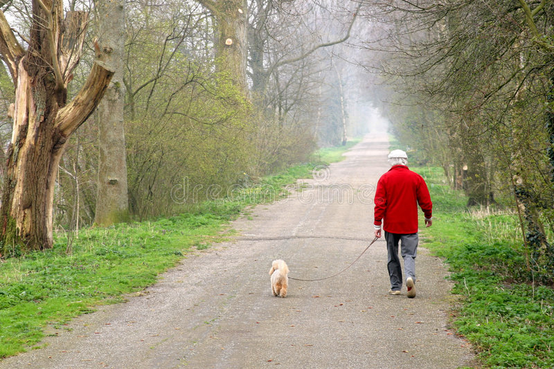 Man walking dog. Man walking his dog on a forest path stock images