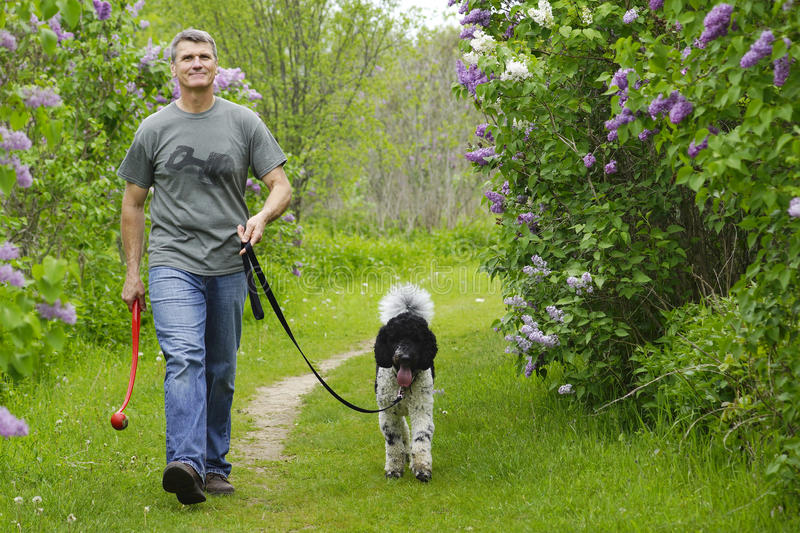 Man walking dog in countryside stock photography