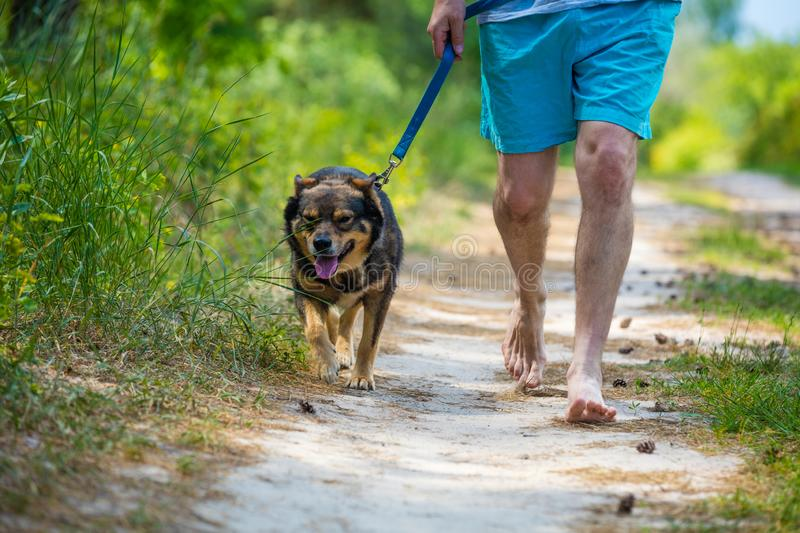 Man walking with a dog on dirt road. Man walking barefoot with a dog on dirt road in summer stock photo
