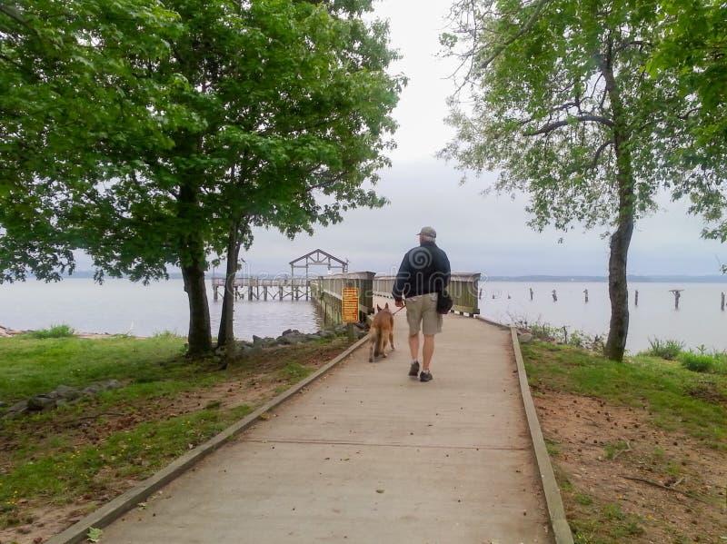 Man Walking Dog Leesylvania State Park Virginia stock image
