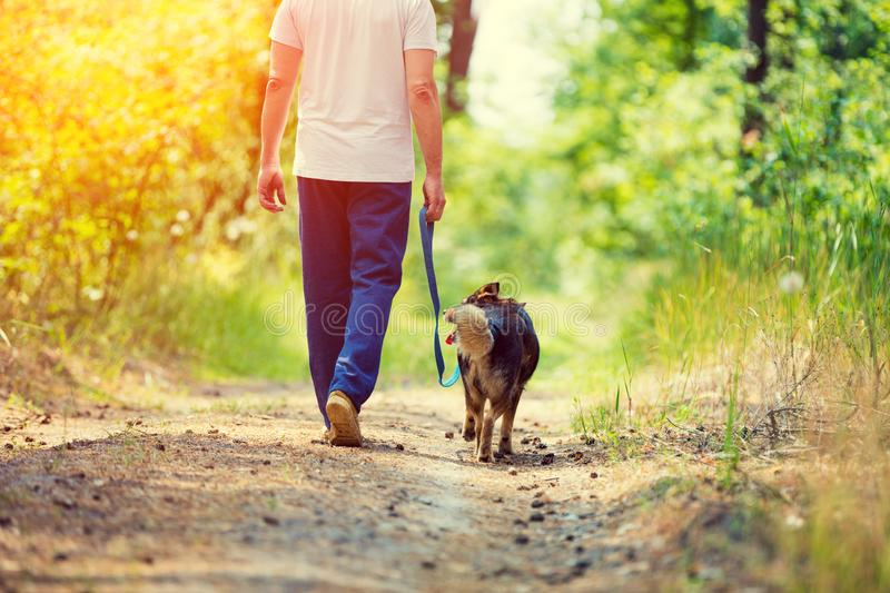 Man walking with a dog. On dirt road in summer stock photo