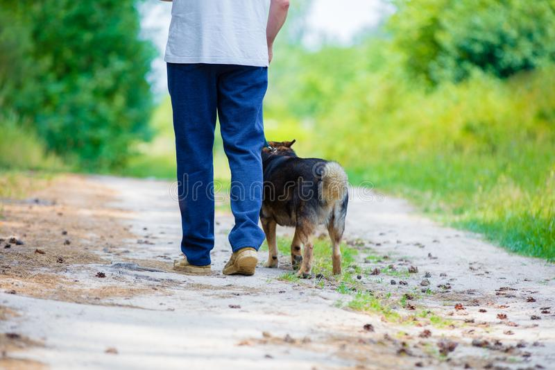 A man walking with a dog. On a rural road in summer stock photos