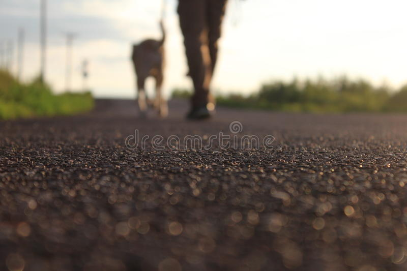 Man Walking Dog. This is a photo of a man walking his dog, with the asphalt in focus stock image